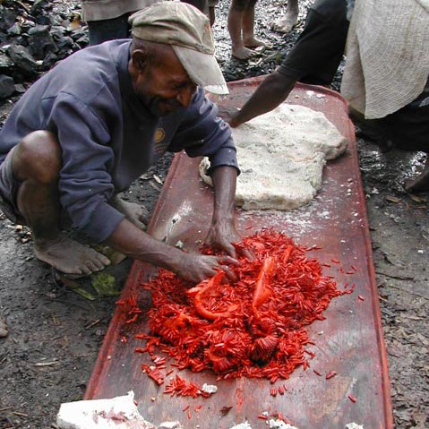 Making the pandanus delicacy in the Star Mountains, West Sepik Province, Papua New Guinea.