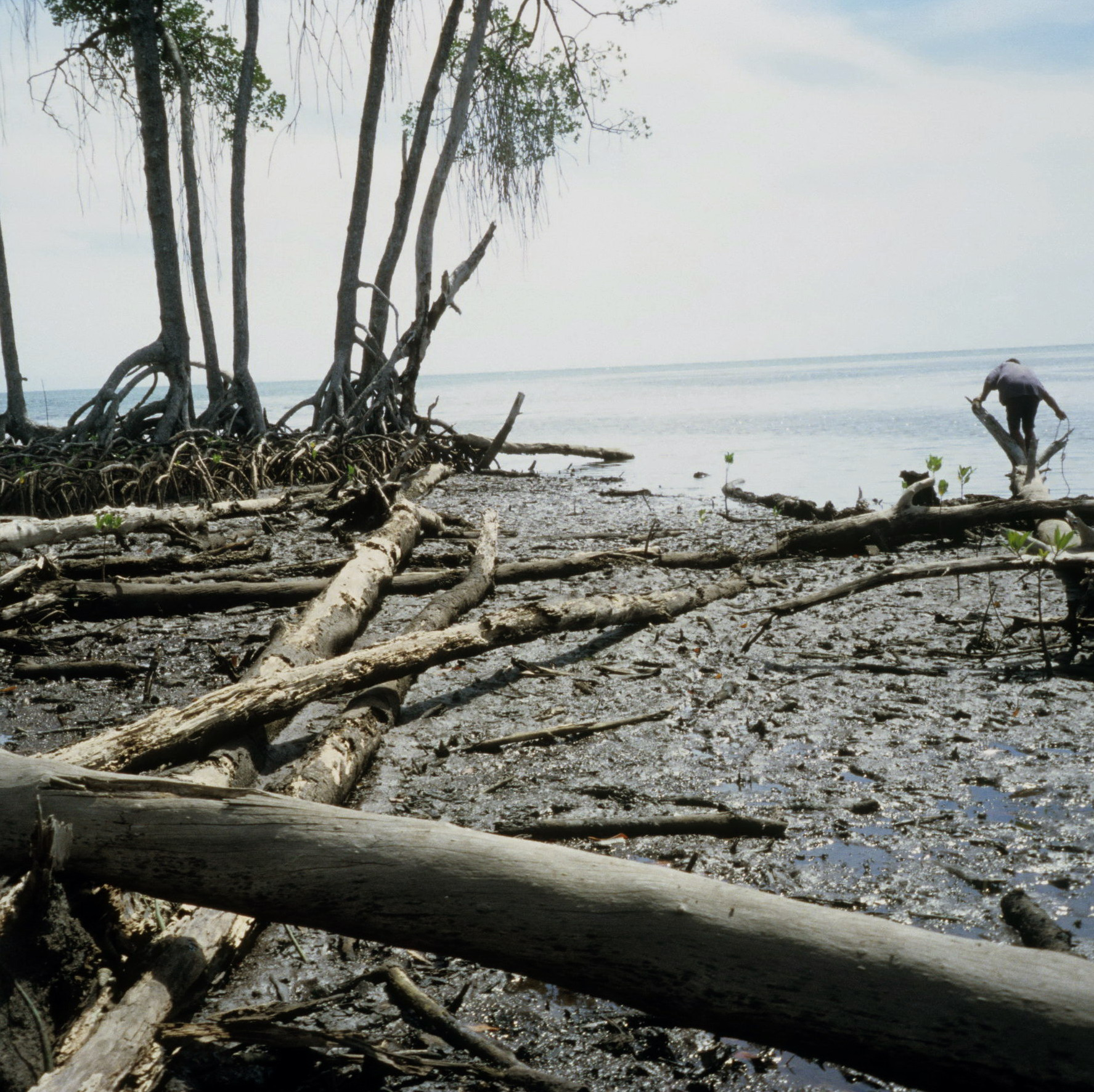 Papuan Gulf Mud and Mangroves, New Guinea Art, Oceanic Art, Tribal Art, South Pacific Art