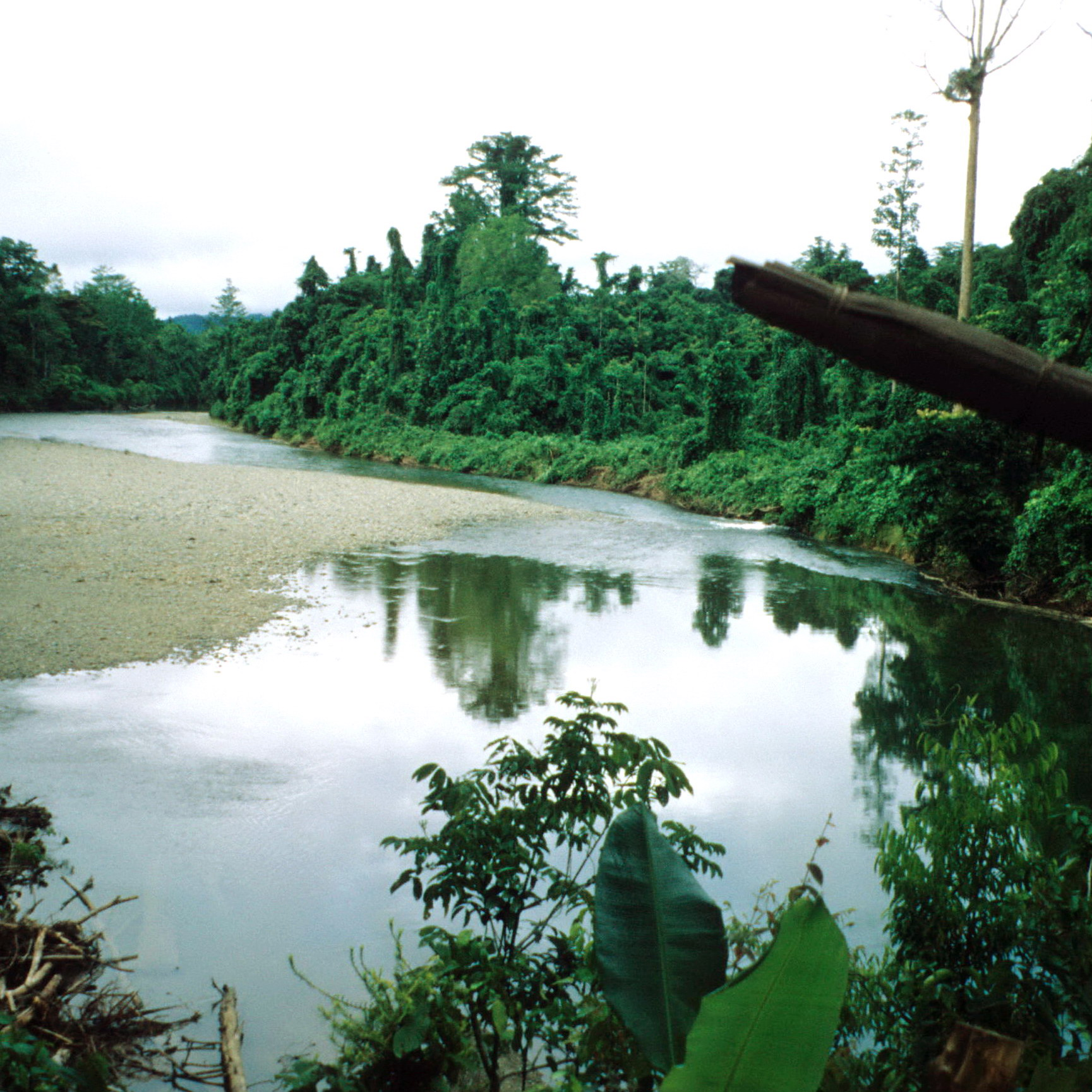 Remote West Sepik River, Bewani Mountains, Papua New Guinea.