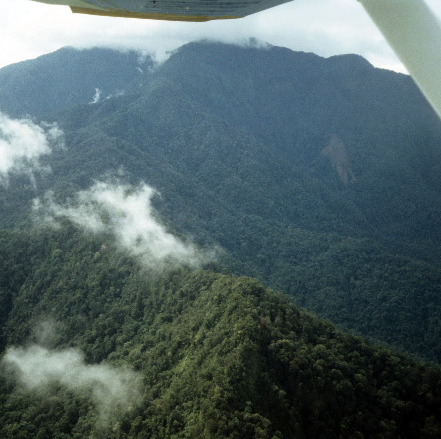 New Guinea Jungle From the Air, Field Collecting New Guinea Art in Situ