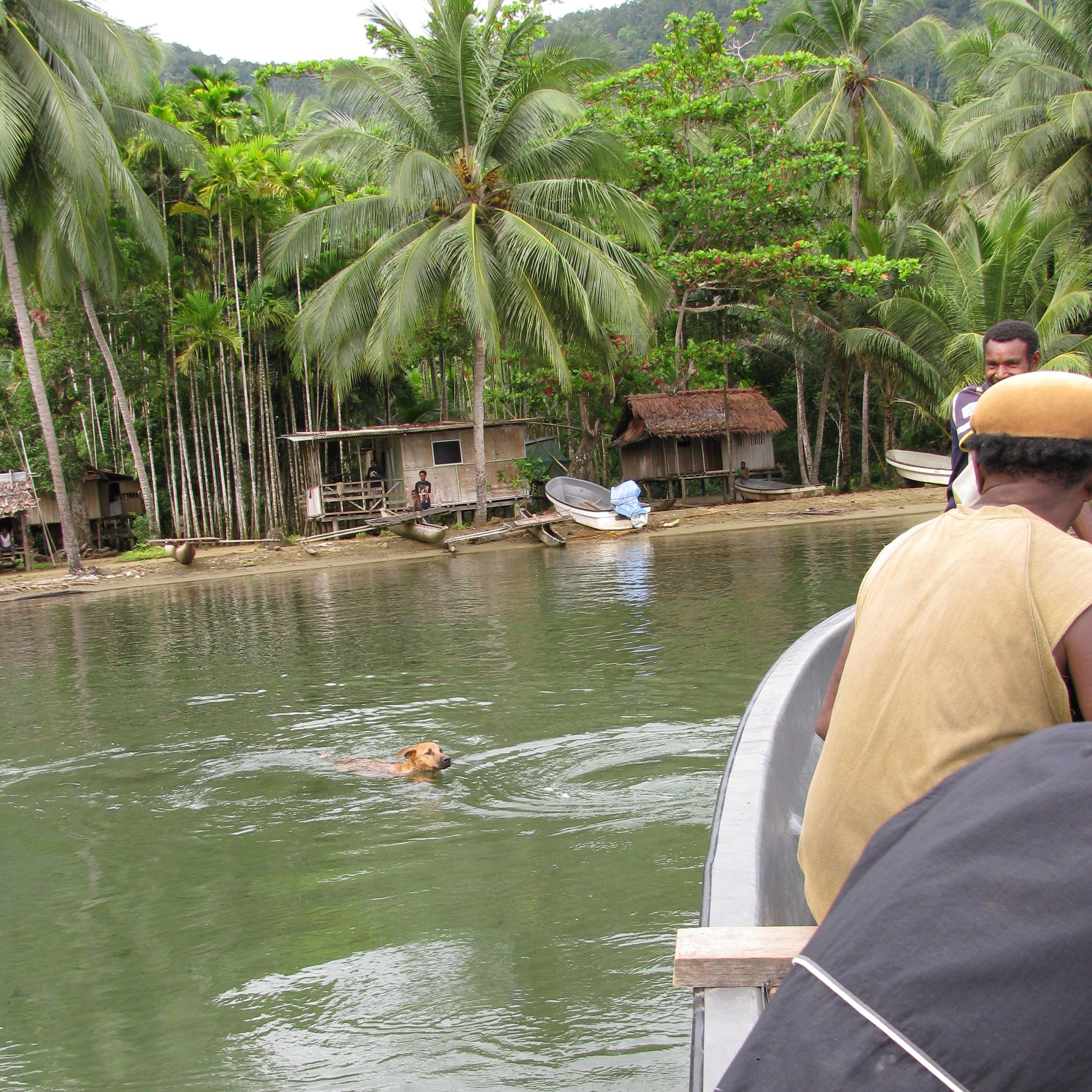 Near Morobe Village, Dog Swimming, New Guinea Art, Oceanic Art, Tribal Art, South Pacific Art