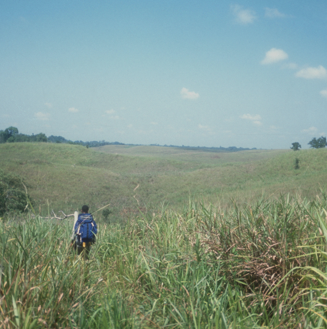 Kunai Grasslands of Sepik Plains, Hot Walking Searching for New Guinea Art