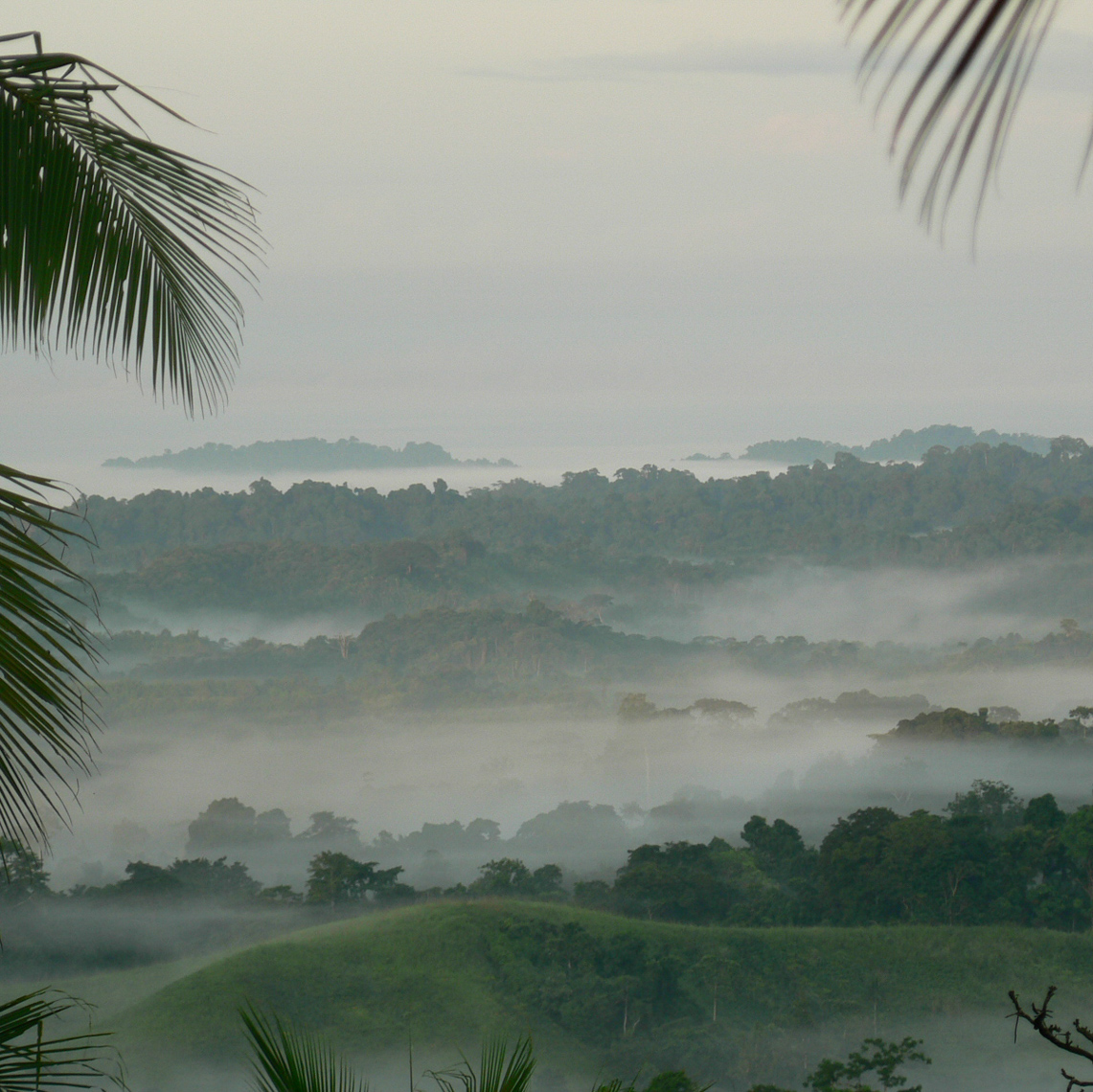 Misty New Guinea Morning, Heading out for Oceanic Art